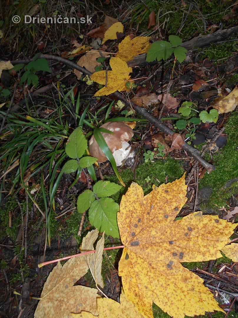 farebna-jesen-v-nasich-lesoch_50