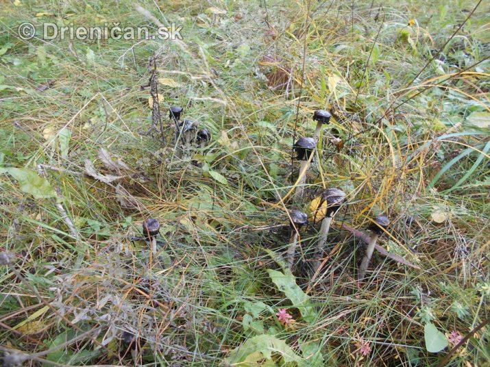 farebna-jesen-v-nasich-lesoch_52