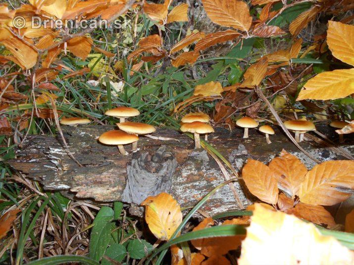 farebna-jesen-v-nasich-lesoch_53