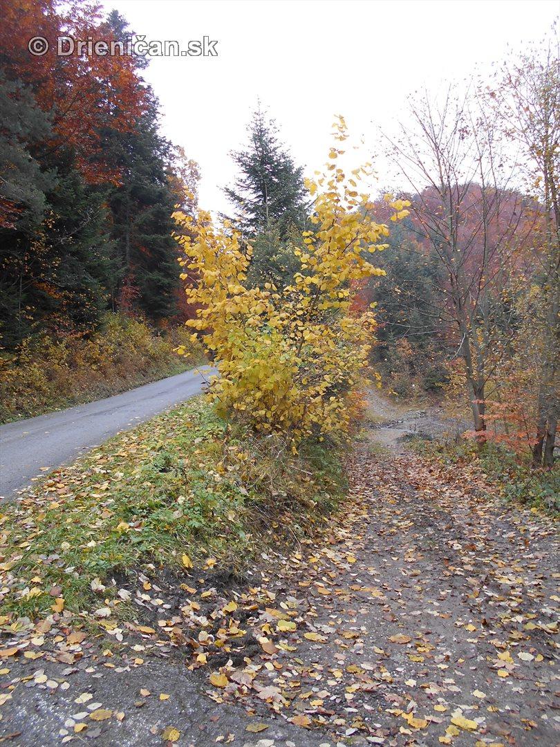 farebna-jesen-v-nasich-lesoch_56