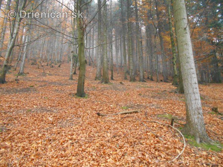 farebna-jesen-v-nasich-lesoch_58