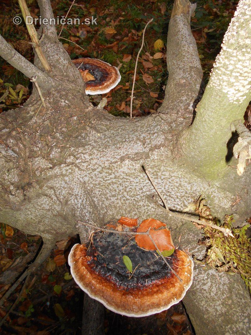 farebna-jesen-v-nasich-lesoch_60