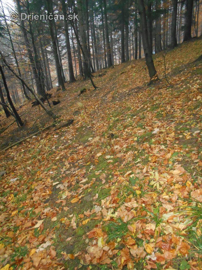 farebna-jesen-v-nasich-lesoch_61