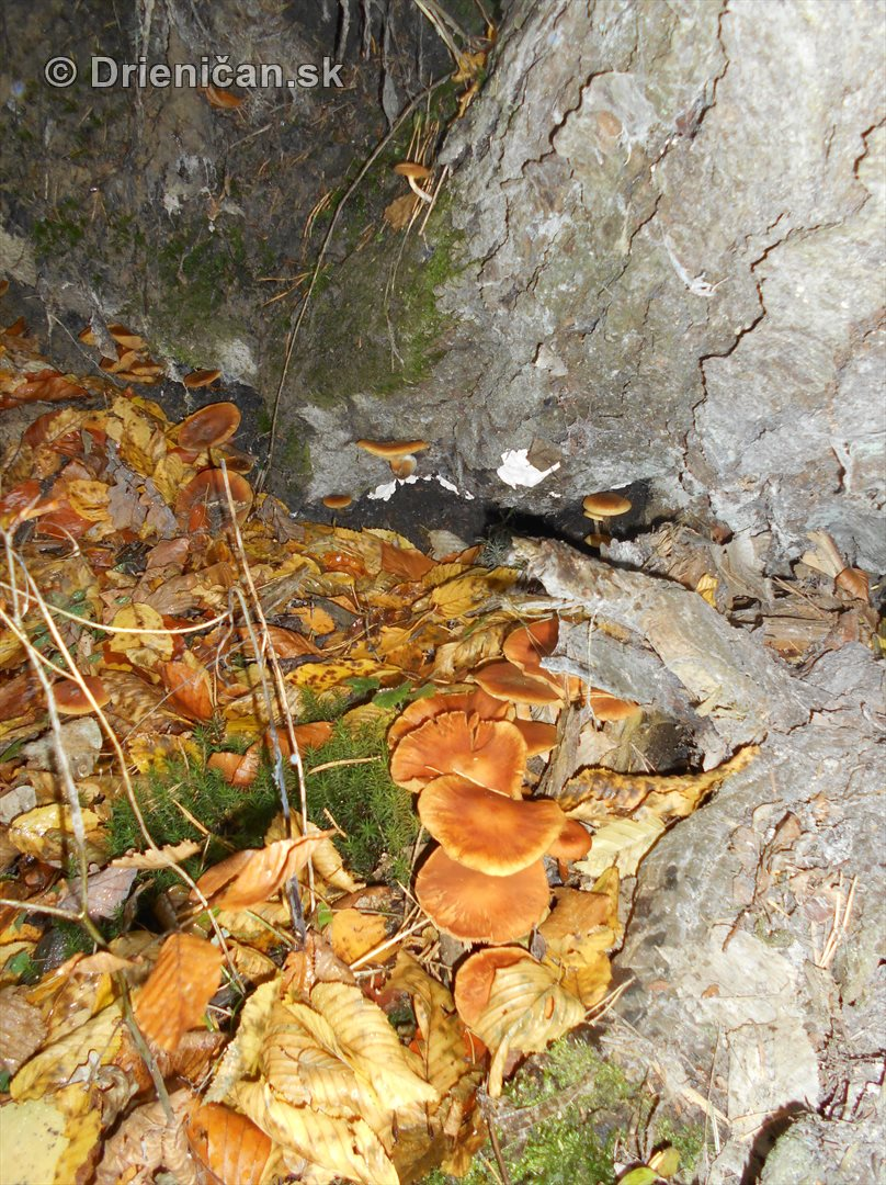 farebna-jesen-v-nasich-lesoch_65