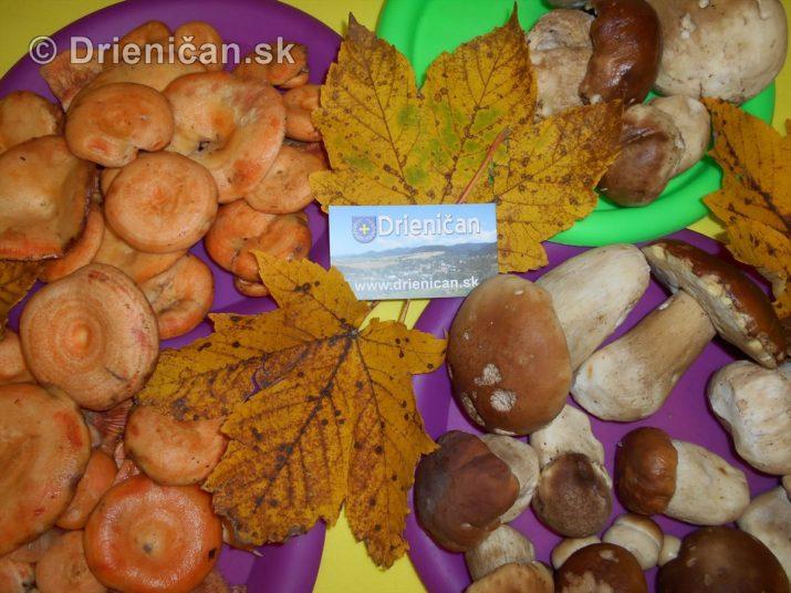 farebna-jesen-v-nasich-lesoch_71