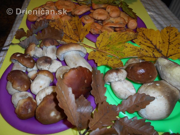 farebna-jesen-v-nasich-lesoch_73