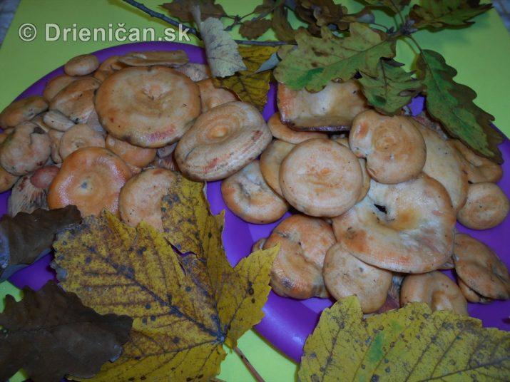 farebna-jesen-v-nasich-lesoch_75