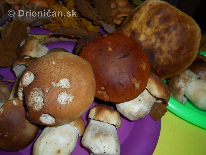 farebna-jesen-v-nasich-lesoch_76