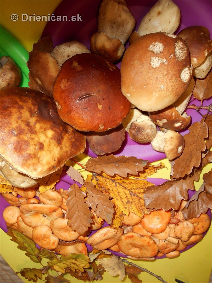 farebna-jesen-v-nasich-lesoch_78