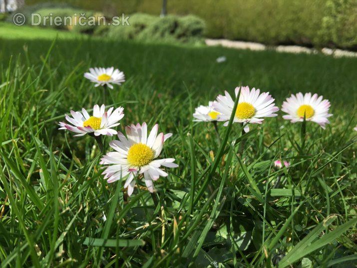 Sedmokrásky všetky krásky :)