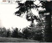 Tabuľa na strome, pridal p.Tomko