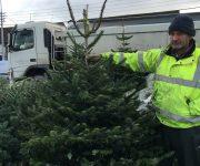 Živý Vianočný stromček ?