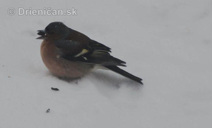 Marcová snehová fujavica
