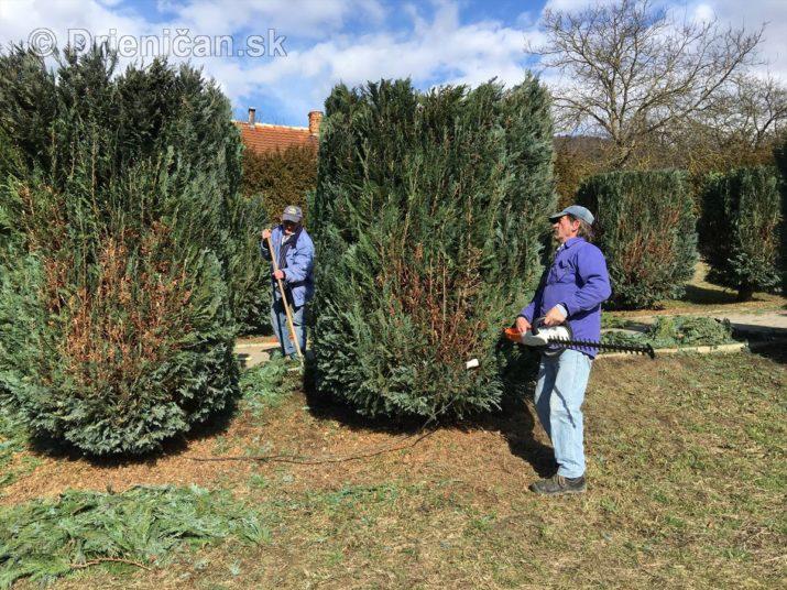 Jarná úprava stromčekov v Zelenom Háji