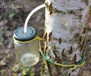 Zázračná brezová voda