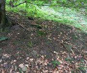 V suchom lese hríby nerastú...