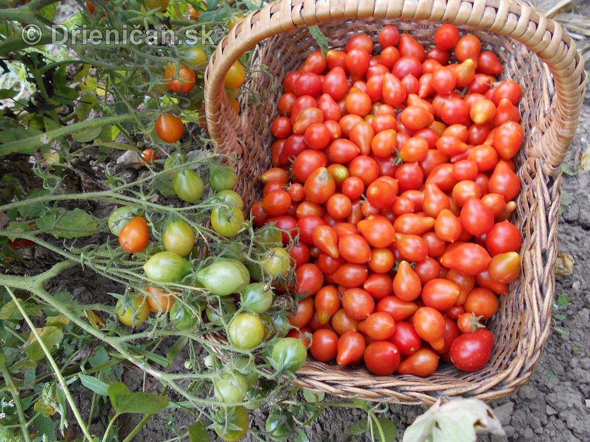 Hruškové paradajky