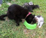 Mačka s mašľou a päť mačiatok
