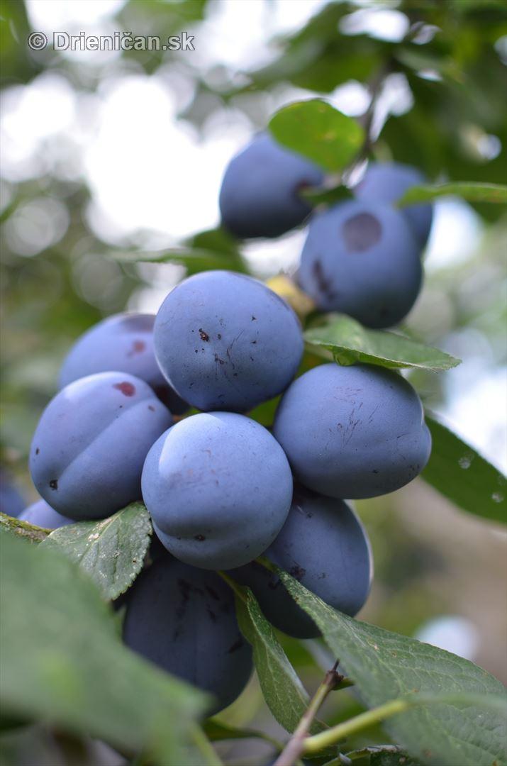 Nadúroda ovocia