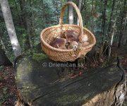 Zabudnutý košík v lese...