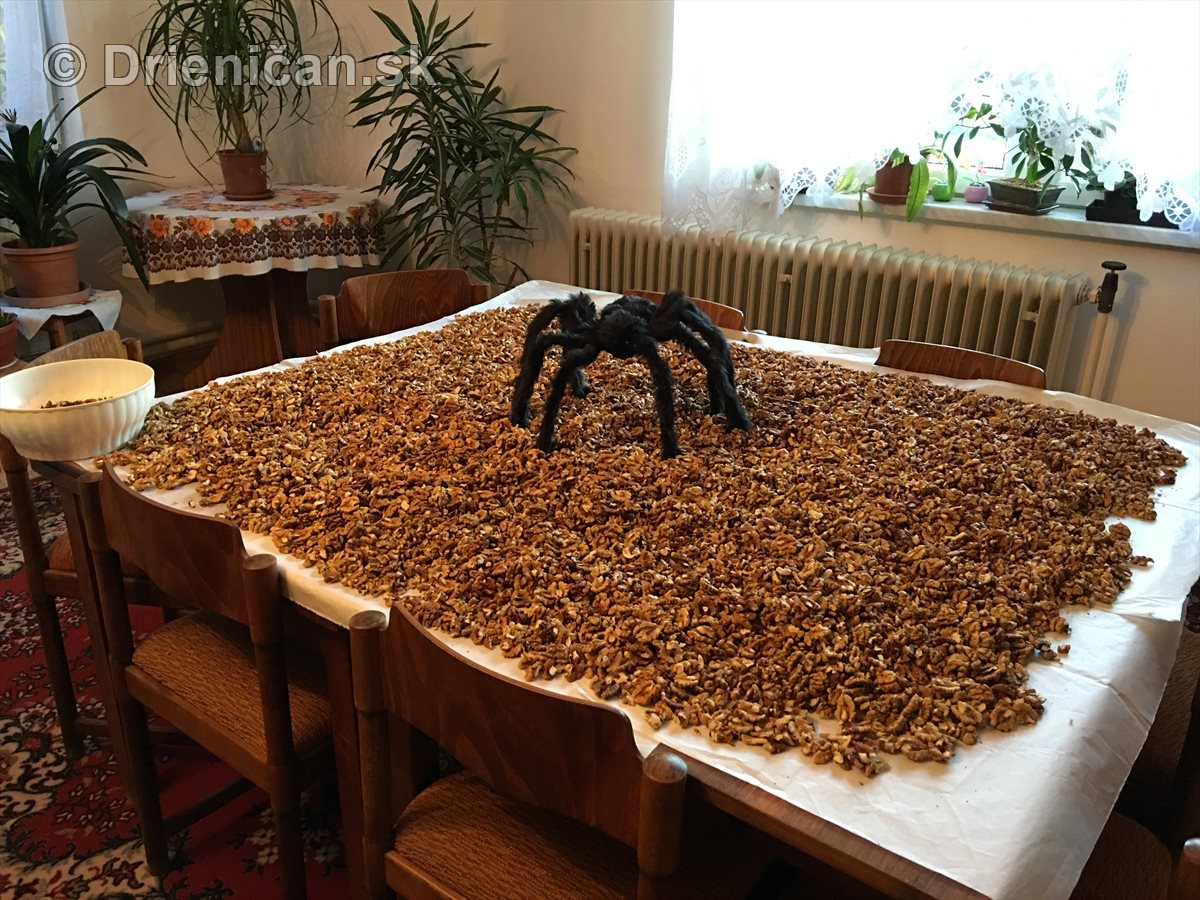 Pavúk Orechový