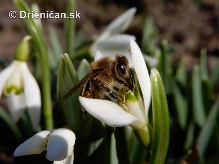 Závan jari na Drienici