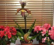 Kvety na okennom parapete