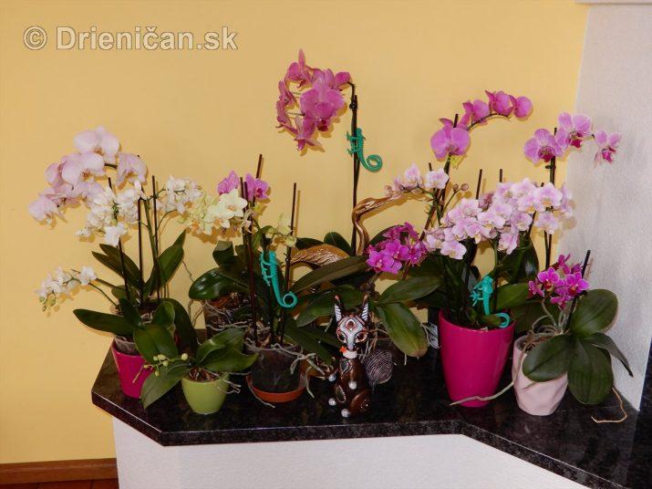 Tinine orchidey